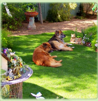 Pet Sitting Services and Rates, Tucson, Arizona